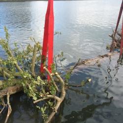 Gecontroleerd bomen laten afzinken in de Nederrijn